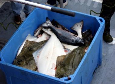 Kodiak Fishing 2006 1