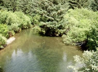 Kodiak Salmon (10)