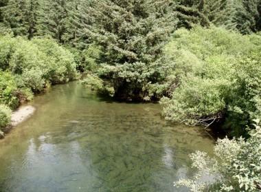 Kodiak Salmon (11)