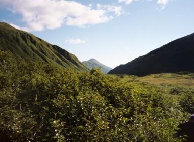 Kodiak Saltery River (8)