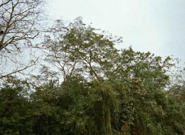 Nicaragua trip (50)